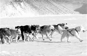 Siberia holds the key to the human love affair with dogs