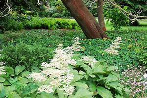 Gartengestaltung Unter Bäumen : stauden standorte die richtig passen ~ Yasmunasinghe.com Haus und Dekorationen