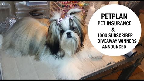 Petplan pet insurance allowed spike to heal in a way that wouldn't be possible otherwise. Petplan Pet Insurance and Giveaway Winners from 1000 subscriber giveaway - YouTube