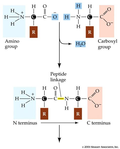 chemistry condensation reaction yahoo answers