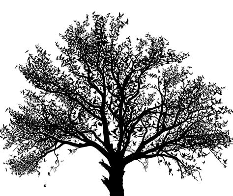 oak tree clipart black and white oak tree clip 24