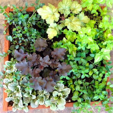 shade loving perennials uk pin by lori rich on shade perennials pinterest