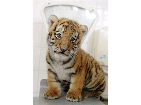Lass Ihn Raus Den Tiger by Bildergalerie Fotos Alisha Lass Ihn Raus Den Tiger