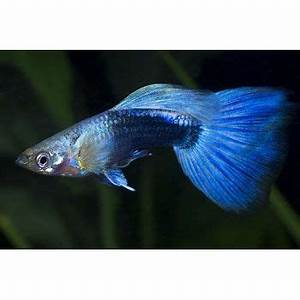 Neon Fish and Blue on Pinterest