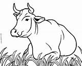Cow Coloring Pages Cool2bkids Cows Printable Printables Drawing Moose Line Sheets Realistic Animals Stenciling Stencils Sketches Templates Adults Face Books sketch template