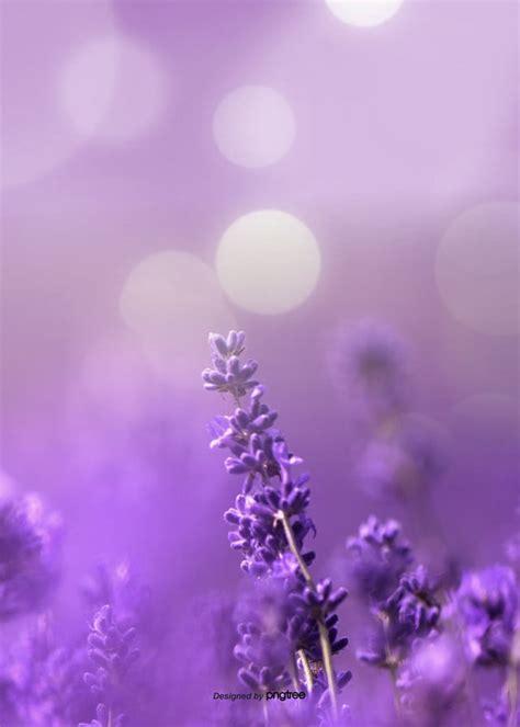 aesthetic lavender background design aestheticism soft