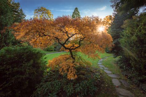 Garten Im Herbst Wässern by Herbst Im Japanischen Garten