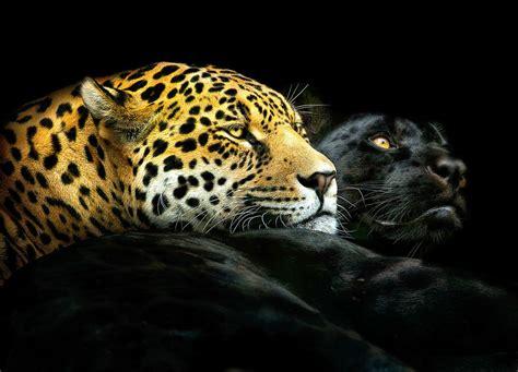 Fierce Animal Wallpapers - fierce animal portraits