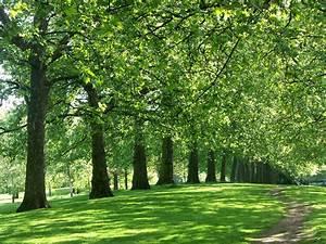 Parks In London : london s top three royal parks montcalm london city blog ~ Yasmunasinghe.com Haus und Dekorationen