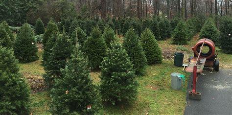 christmas tree farms pennsylvania jug hill christmas trees washington crossing pa 5061