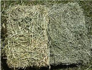 Horse Hay: Guide to Feeding A Horse