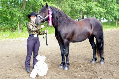 canadian horse breed heart heritage standard hickie julie courtesy