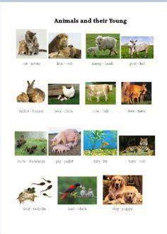 pin  julie toporek  ot animals farm animals list