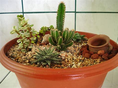 mi mini jardin de cactus p jardin pinterest love
