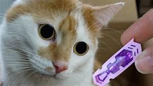 Gemüse Für Katzen : 3 coole katzen spielzeuge f r johnny und bella youtube ~ Watch28wear.com Haus und Dekorationen