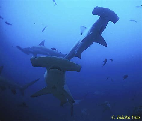 diving for dive trip shark charter