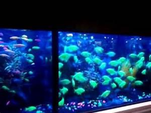 Neon Fish Glow in the dark Fish Color Fish Aquarium Fish