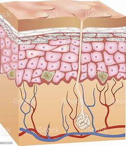 Human Epidermis Skin Structure 3d Stock Illustration - Download Image Now
