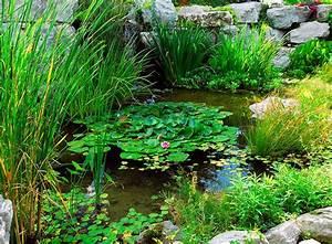 Kleinen Teich Anlegen : teichzonen passende wasserpflanzen zooroyal ratgeber ~ Whattoseeinmadrid.com Haus und Dekorationen