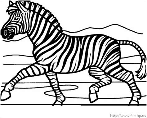 zebra coloring page zebra pictures to color