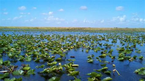 Boat Rides In Florida by Air Boat Ride In The Everglades National Park Florida