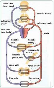 3480 Best Medical Type Folks Images On Pinterest