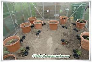 Pferdemist Für Tomaten : tomaten go birthes bunter blog garten ~ Watch28wear.com Haus und Dekorationen