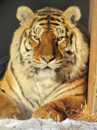 Exotic Feline Rescue Center Centerpoint All You