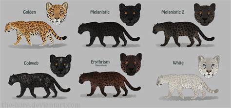 jaguar colors jaguar colour morphs by the hare on deviantart