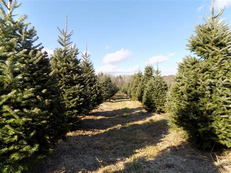 when the crop is christmas trees you re selling more than