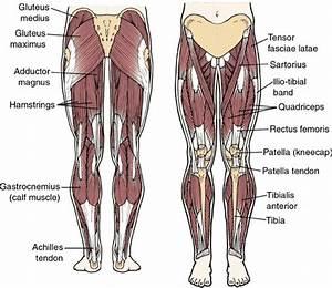 Muscle Gain  U00ab Adriancrowe