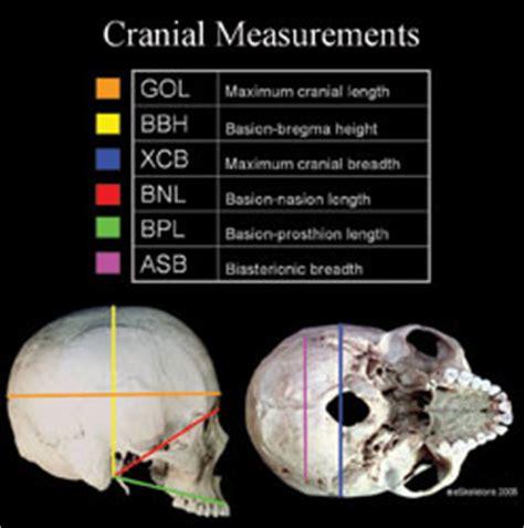 Human Head Measurements