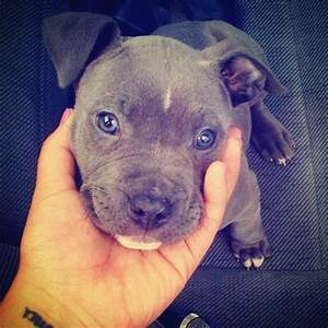 17 Best images about BabY DoG's on Pinterest | Puppys, Pit ...