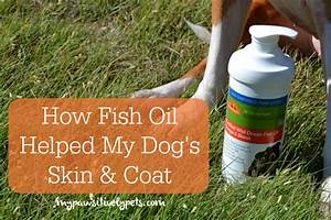 how fish oil supplement helped my dogs
