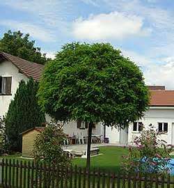 Baum Kleiner Garten : kleiner baum vorgarten schatten wohn design ~ Orissabook.com Haus und Dekorationen