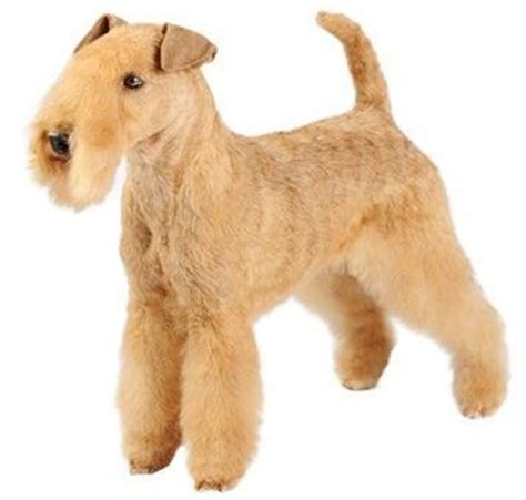 Terriers That Dont Shed by Top 30 Dogs That Don T Shed Small Medium And Large