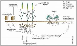 Agricultural Practices Which Result In Soil Acidification