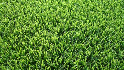 Palisades Zoysia Without The