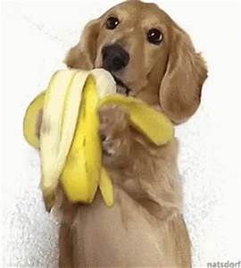 Dog Eating Banana GIFs - Find & Share on GIPHY