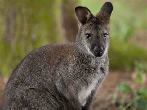 pet wallaby decapitated wallaby found in ealing animal park the west londoner