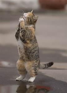 7 cats begging meow aum