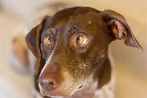Alison's cross eyed dog Jack. | Flickr - Photo Sharing!