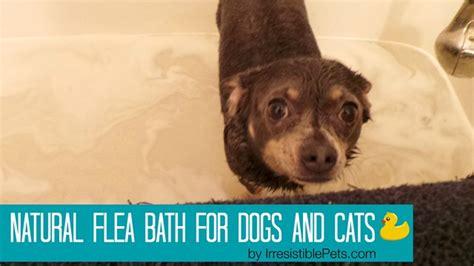 natural flea bath  dogs  cats irresistible pets
