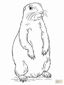 Prairie Coloring Pages Coloring Pages