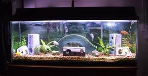 transform the way your home looks using a fish tank With decorative fish tank ideas things to consider