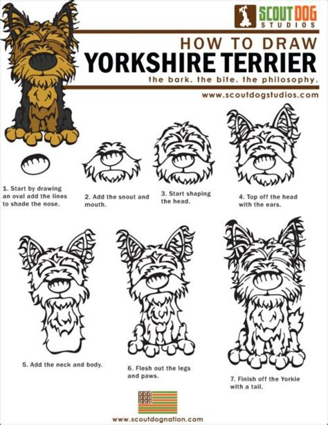 draw yorkshire terriers yorkies
