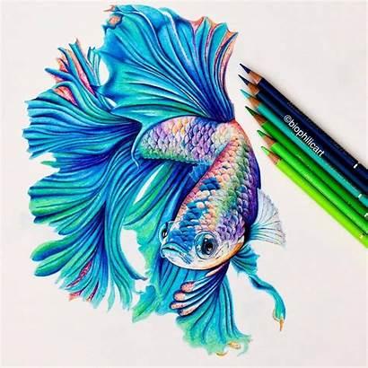 Pencil Realistic Drawings Fish Animal Drawing Animals