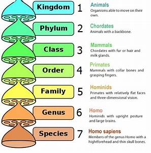 classification of animals kingdom phylum - Google Search ...