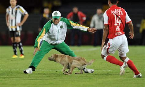 Ķengurs spēlē futbolu un aligators golfā. Amizantākie ...