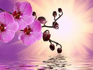 Schöne Orchideen Bilder : fotos von orchideen blumen wasser gro ansicht ~ Orissabook.com Haus und Dekorationen